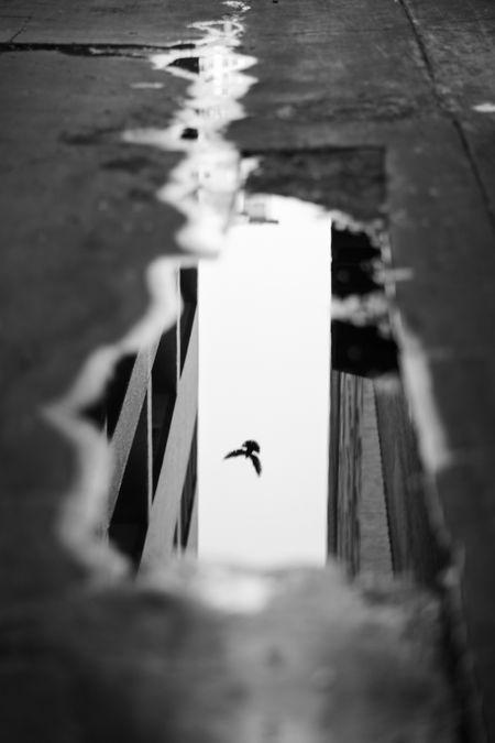 Fototipp - Reflexionen, jede Pfütze kann ein tolles Fotomotiv werden. Also schau auch mal nach unten;-)