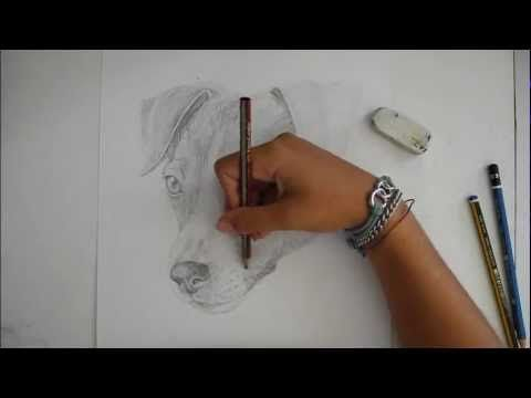 Speedpaint - Disegno di un Jack Russel ( cane ) - Disegno Libero - YouTube