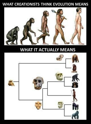 Pinned to clarify an outline of what fossil evidence actually means. The misinterpretation is not only presented by the ignorant. A clever dishonest religious leader spreads Fundamentalist rubbish as it keeps and grows his number of ignorant followers. The misinterpretation is an embarrassment to intelligent educated and honest believers.