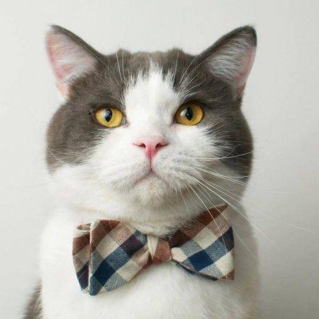 noeud papillon collier pour chat carreaux
