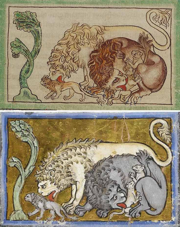 Lions from the Northumberland Bestiary, English, about 1250-60. J. Paul Getty Museum (top). Lions from Royal 12 C. xix, English, about 1200-1210. British Library (bottom)