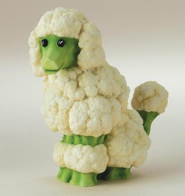 cauliflower poodle