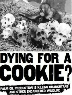 Dying for a COOKIE? Palm Oil production is killing orangutans and other endangered wildlife.