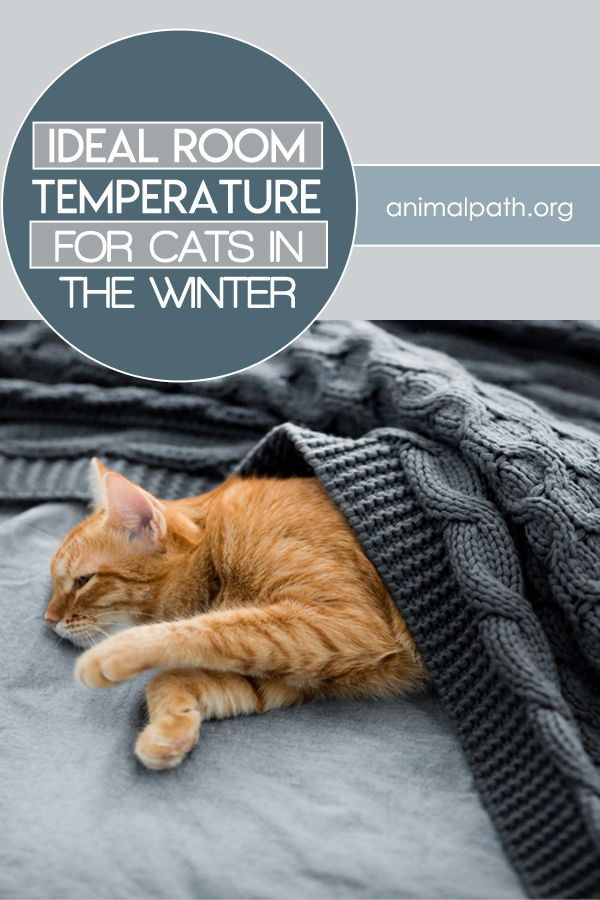 Ideal Room Temperature For Cats In The Winter Winter Cat Cat Neutering Cats