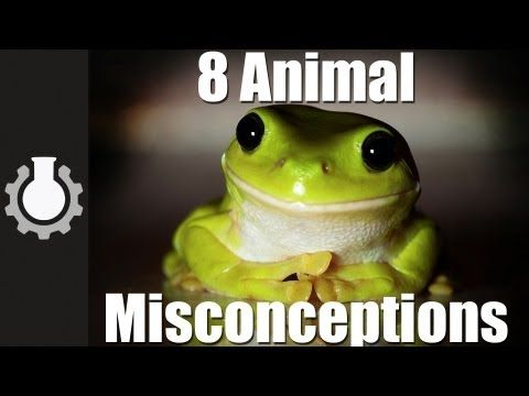 8 Animal Misconceptions. Helpful to know: If you find a baby bird and can reach it's nest, it's ok to pick it up and put it back. It's mother won't reject it because of your scent!