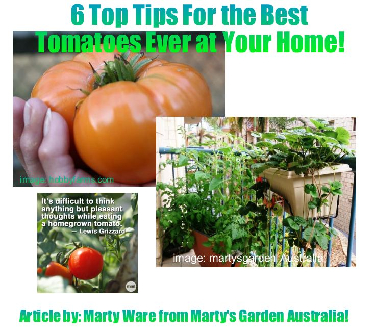 6 Top Tips for Home Grown Tomatoes