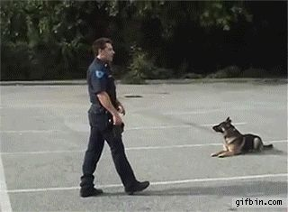 This is what a well-trained dog looks like.
