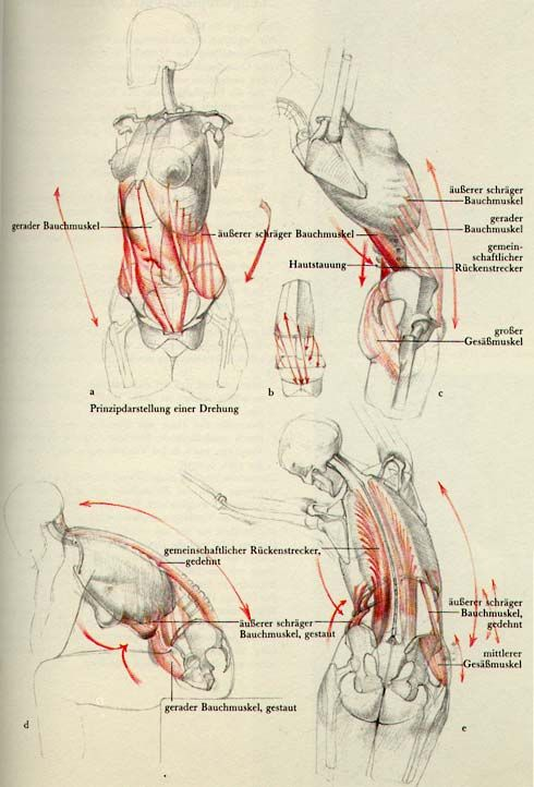 310 best Anatomy drawing images on Pinterest | Anatomy reference ...