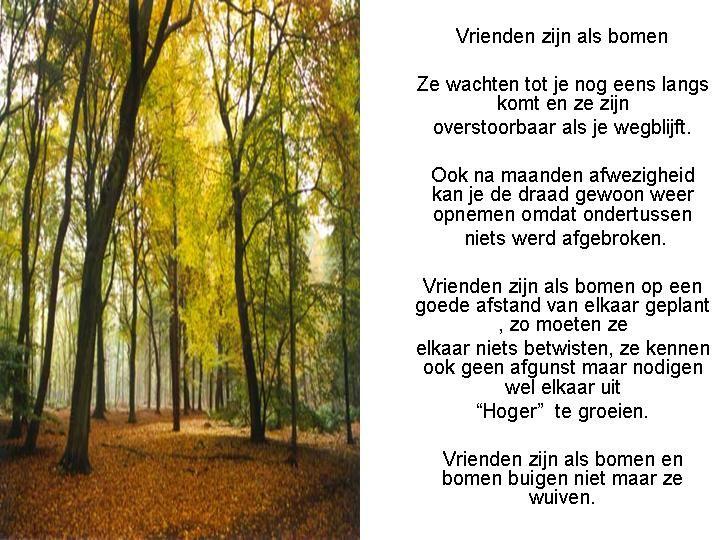 Citaten Herfst Wisuda : Beste ideeën over herfst citaten op pinterest giving