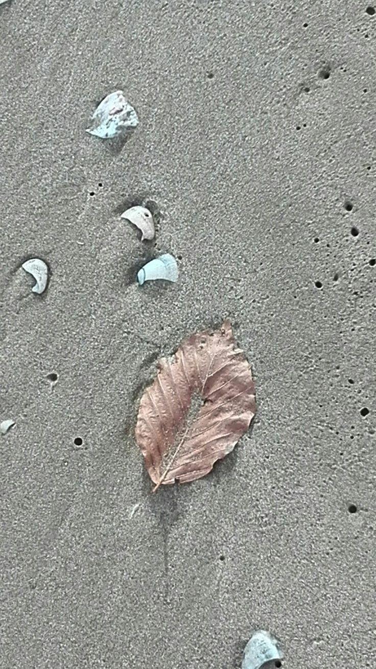 Le foglie di mare assomigliano un po' alle donne che non si arrendono mai: di una bellezza sconvolgente, sempre e comunque.
