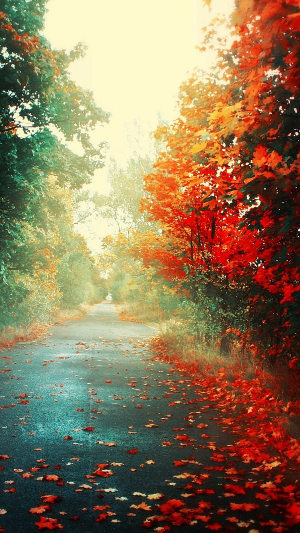 Elegant Windows Phone Autumn Wallpapers All About Natural Beauty