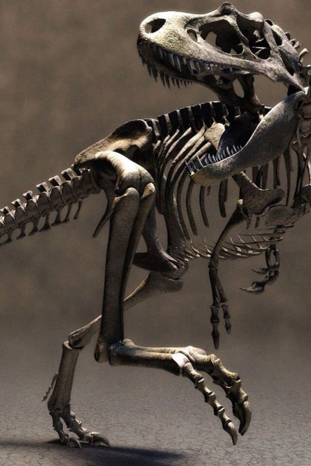T-Rex  | In #China? Try www.importedFun.com for award winning #kid's #science |