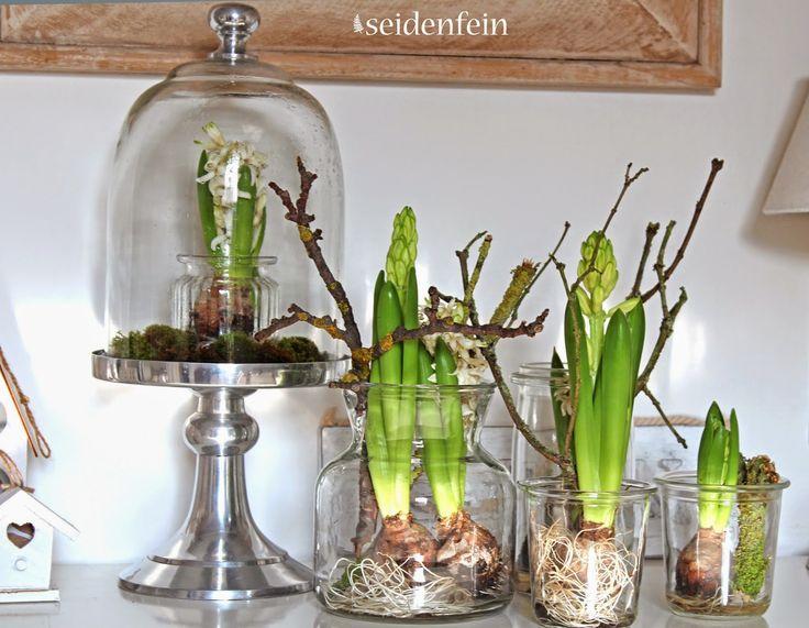 Hyazinthen, Tulpen, Spinnen, Wolle, Häkeln, Stricken, Pflanzengefärbte Wolle, Hyazinten In Glas