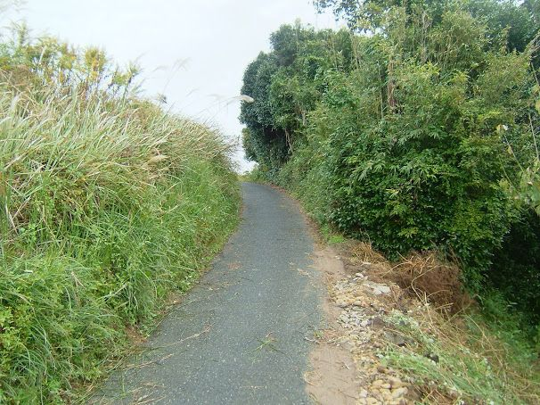 勝己道、The lane of Katumi - Google+