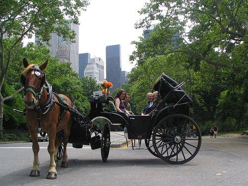 carriage ride through central park places i 39 ve been pinterest. Black Bedroom Furniture Sets. Home Design Ideas