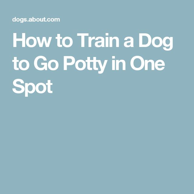 How to Train a Dog to Go Potty in One Spot