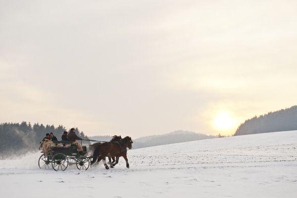 Den #Weitblick im #Mühlviertel bei einer Rundfahrt im #Pferdeschlitten genießen. Das #Mühlviertel beim #Winterreiten entdecken. Weitere Informationen zu #Winterurlaub im Mühlviertel in #Österreich unter www.muehlviertel.at/winterreiten - ©Tourismusverband Mühlviertler Kernland/Erber