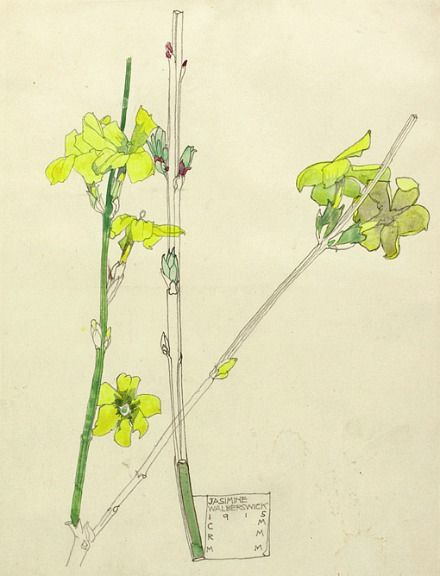 Charles Rennie Mackintosh// jasmine// 1915