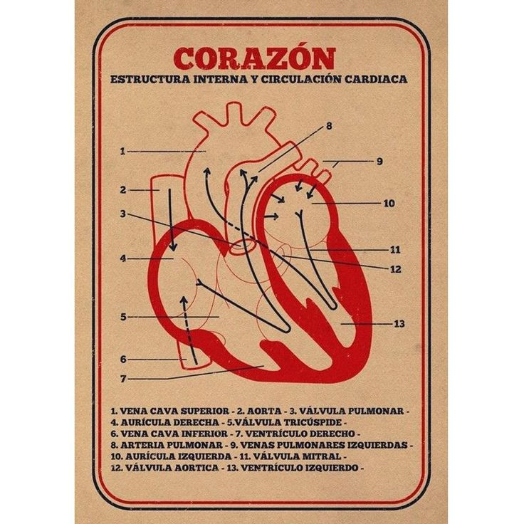 12 best LIFE ME images on Pinterest | Human heart, Human anatomy and ...