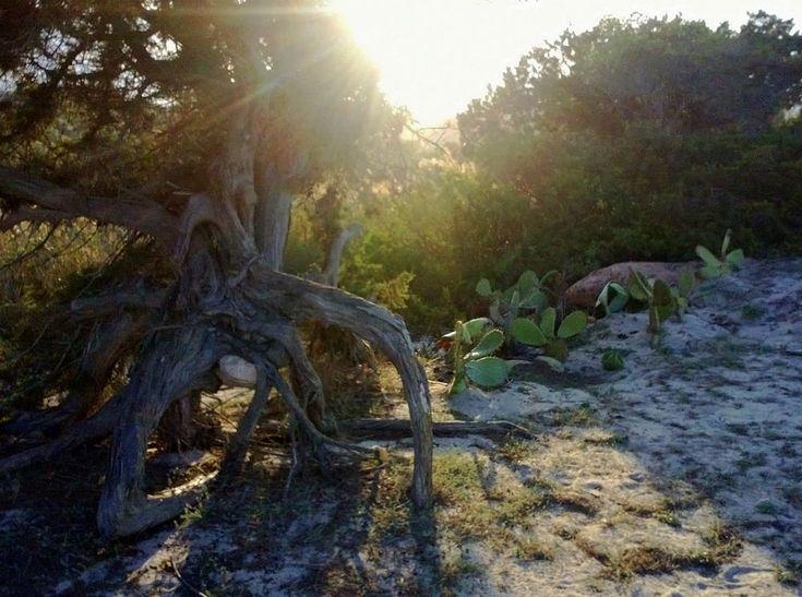 Old tree by marilenavaccarini