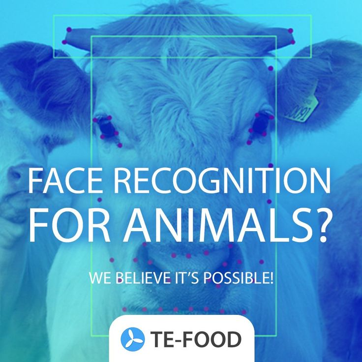 Face recognition for animals