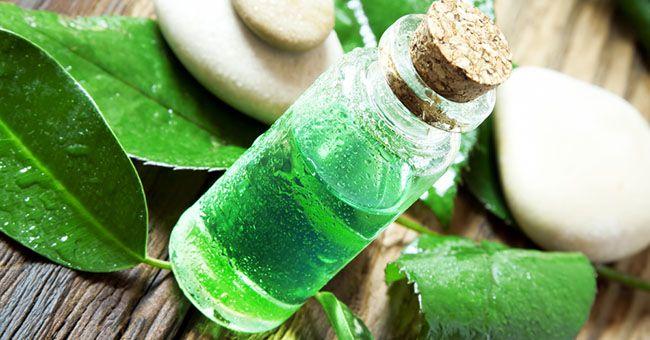 Tea Tree Oil: come usarlo per pulire casa