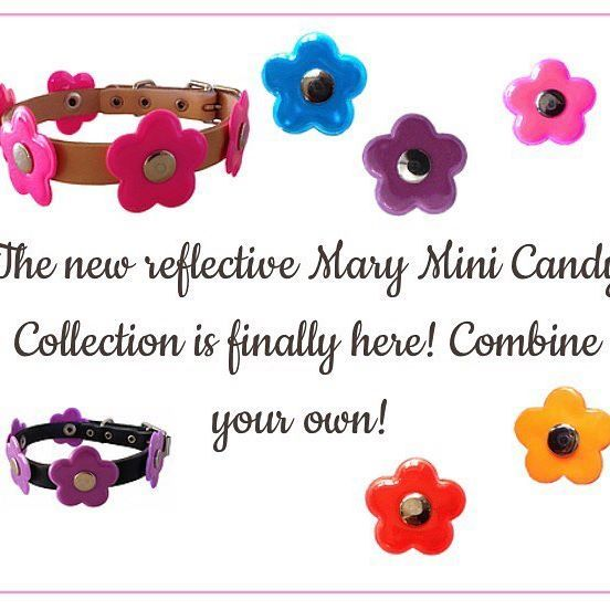 Mary Mini reflective dog collars from Haus of Dogs