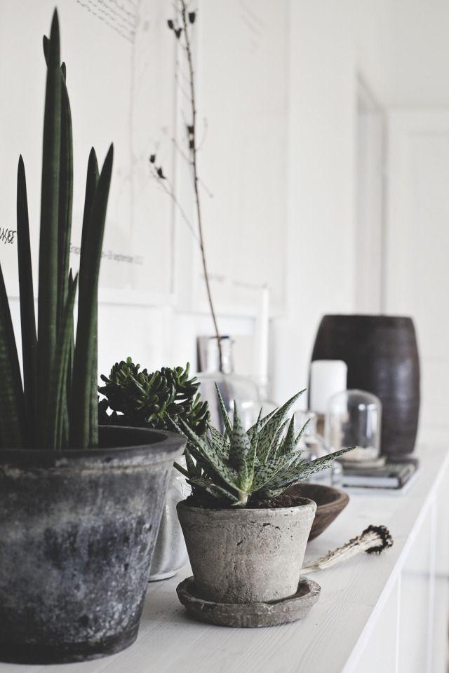 Industrial succulents