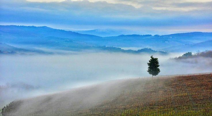 Cold winter morning in Chianti, Tuscany. Photo Luca Di Monte