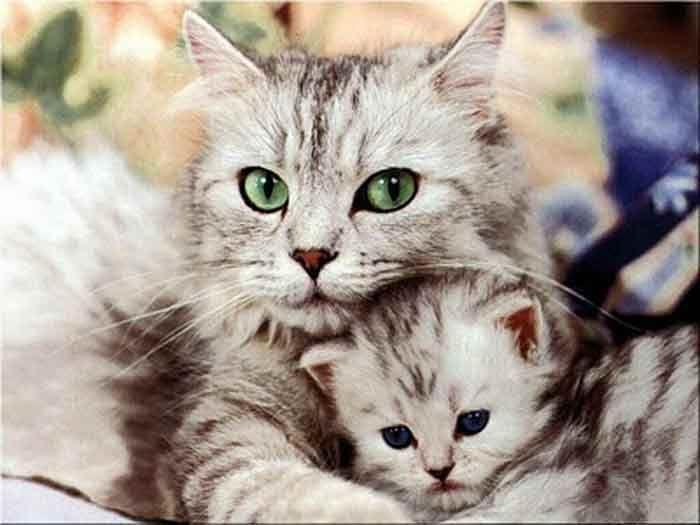 Quando se tem um gato, muita das vezes ele gosta de urinar em cima de um saco detecido, do sofá, tapete, carro, ou outro. Isso é muito complicado, não de