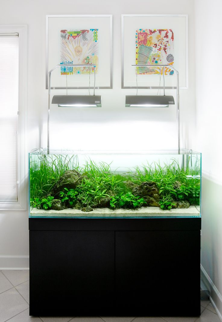 Aquarium design group an ada 120 p complete system - Petit aquarium design ...