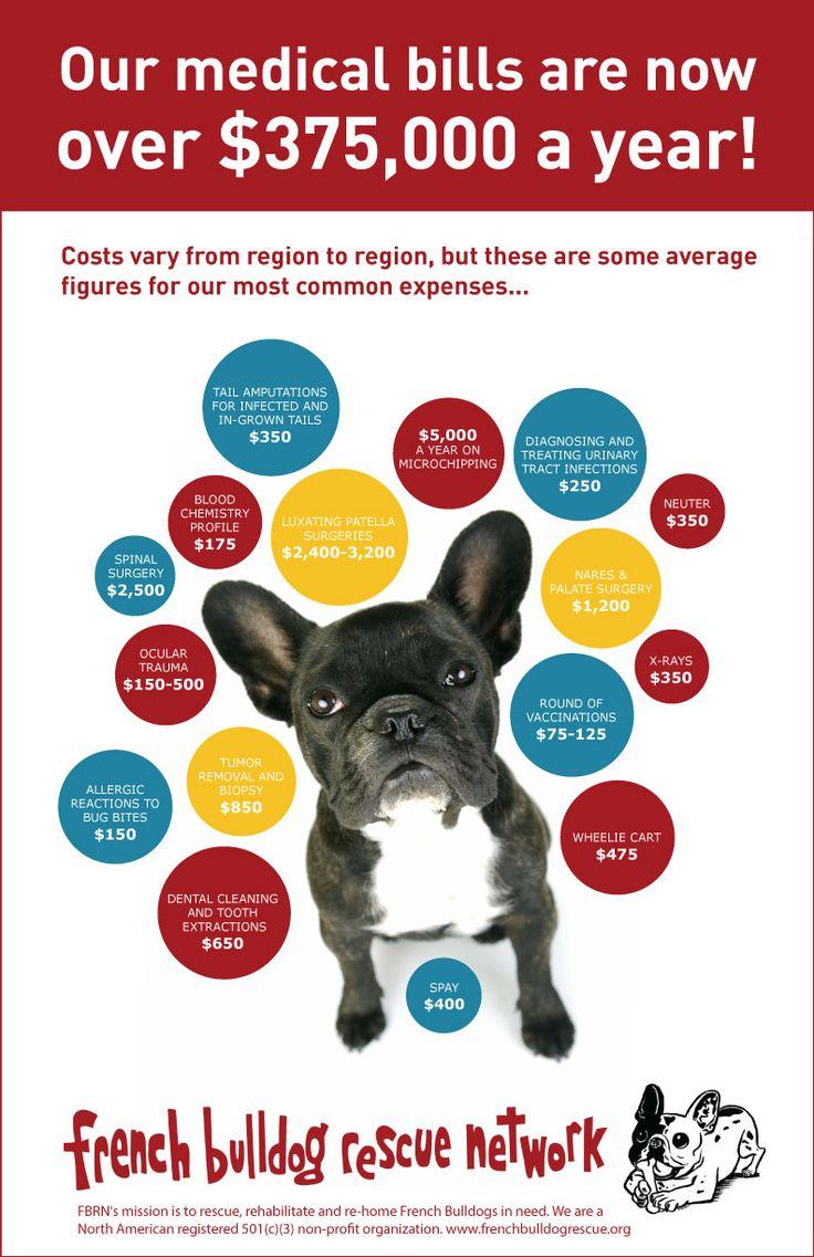 French Bulldog Rescue Network :: Home