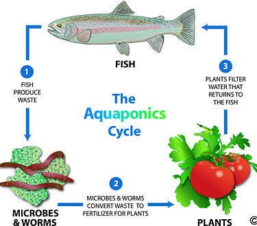 Aquaponics Greenhouse #AquaponicsGreenhouse