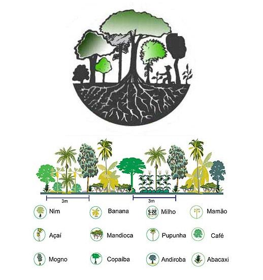Agroflorestas – A agricultura do Futuro   Coletivo Verde
