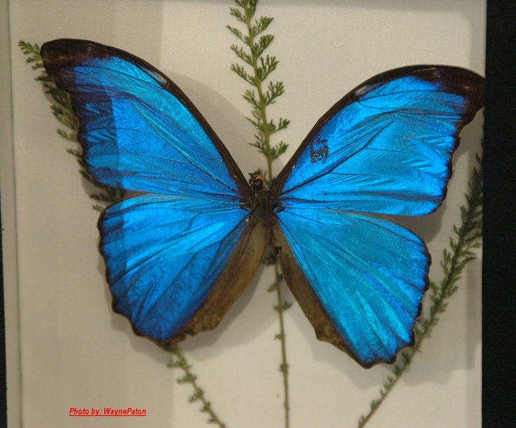 butterfly conservatory niagara falls trips vacations. Black Bedroom Furniture Sets. Home Design Ideas