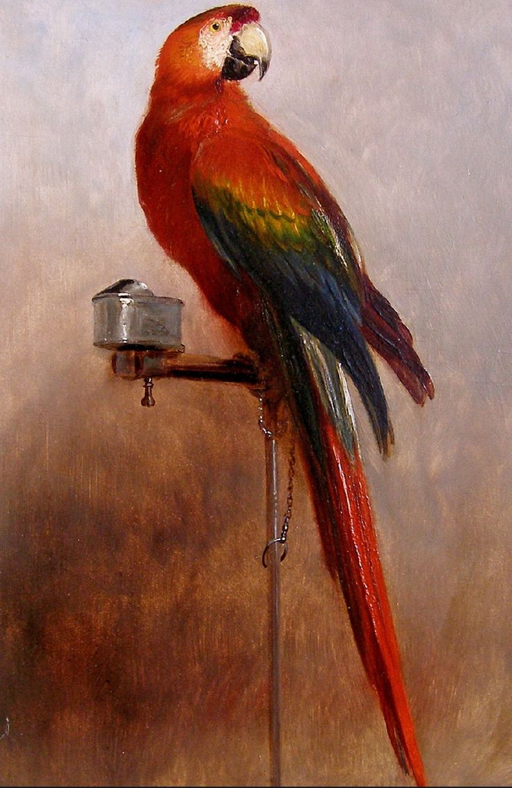 The Pet Parrot as Depicted in 18th and 19th Century Art, Literature, and History: