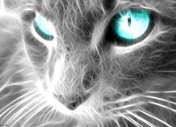 Kot, Fractulius, Niebieskie, Oczy