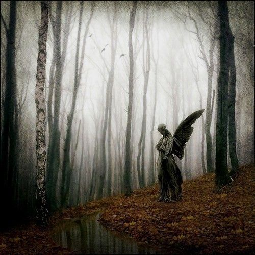 And all I can think is: Run! There's a Weeping Angel loose in the forest! Don't blink! Don't stop looking at it! But don't look it in the eyes!!!!