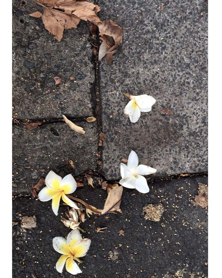 Autumn time ... ☀️ @sateensydney #trendy #colors #authentic #handmade #autumn #newproduct  #bags & #ceramic