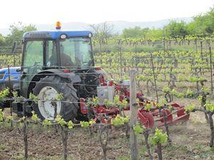 Le griffage du sol entre les rangs avec le tracteur #GourmetOdyssey