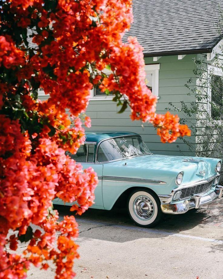 #fein #Schneiden #Blumen #Blumenwelt #die    – Oldtimer autos
