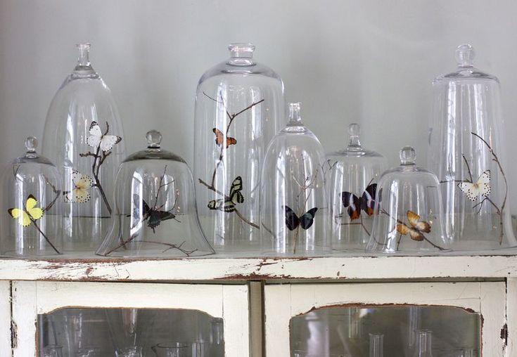 Cloche, items under glass, butterflies