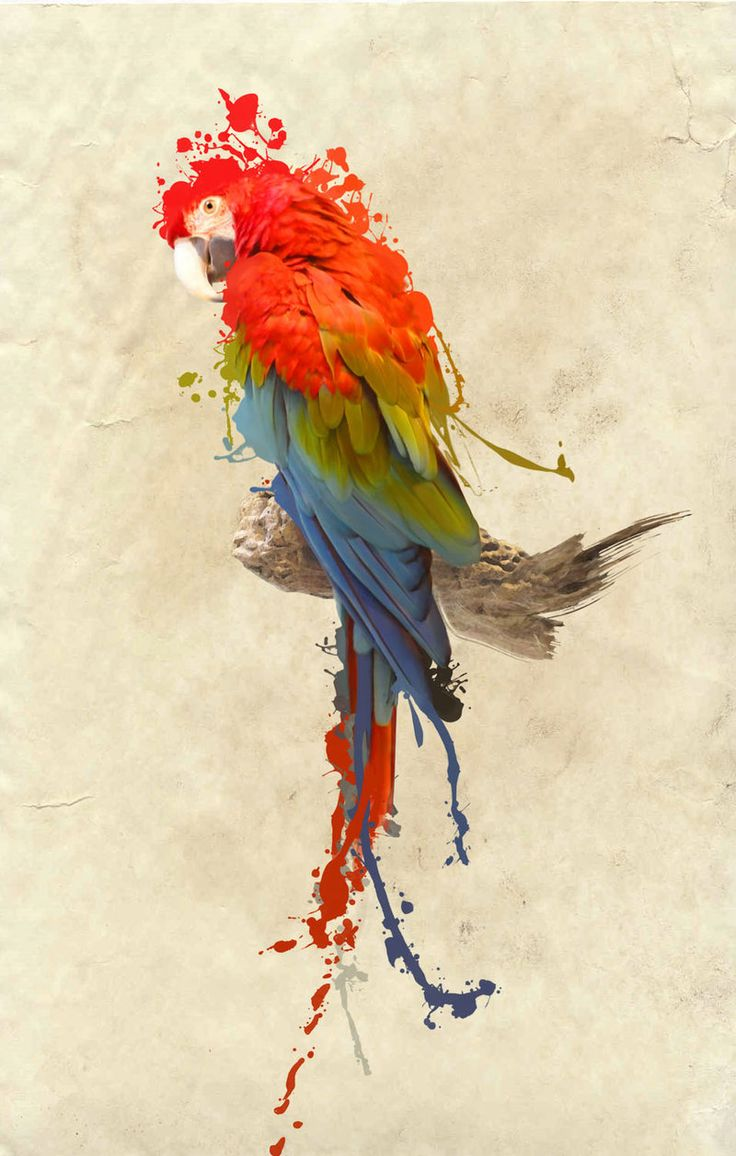 Google Image Result for http://fc08.deviantart.net/fs71/i/2011/078/4/d/scarlet_macaw_by_armonah-d3bzfjh.jpg