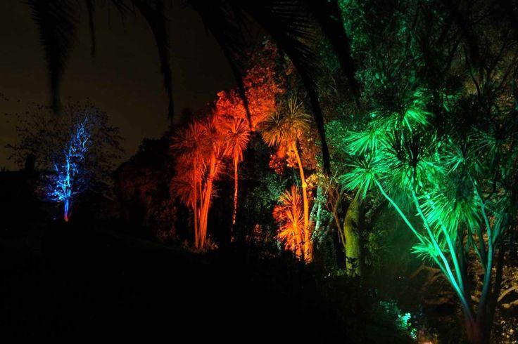 Landscape Lighting design_Insight Light_NZ Cabbage tree.jpg