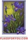 Iris Splendor Garden Flag