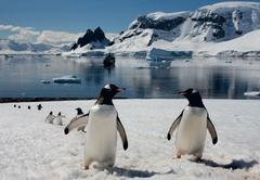 Antarktis - Bessere Reisen, Besser finden: www.zielegal.de