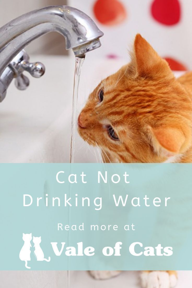 Cat Not Drinking Water Cat Drinking Cat Ailments Cat Diseases