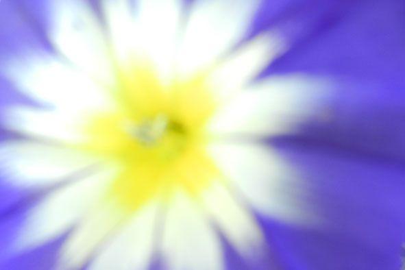 Garden flowers - Extreme closeup - 805