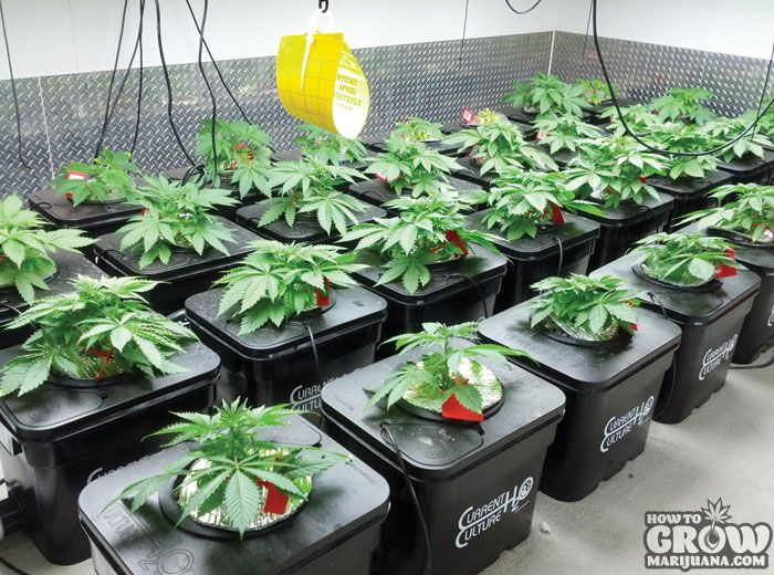 the advantages of indoor plant growing Learn the basics of greenhouse growing from of the us or canada is not to plant into a greenhouse until of the advantages gained from greenhouse growing.