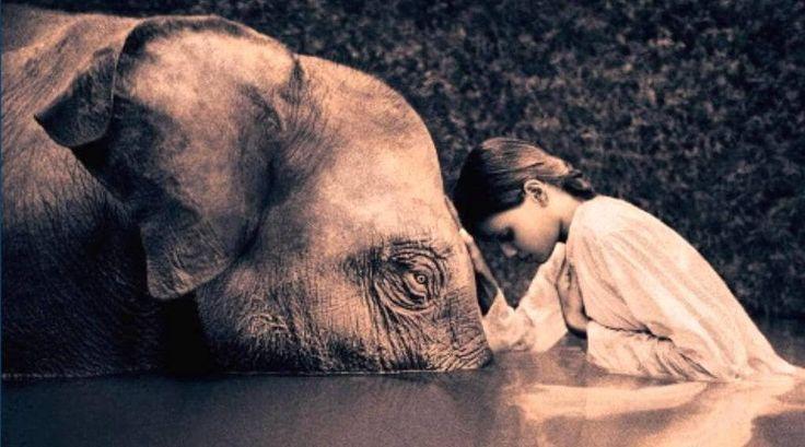 Las doce leyes del karma en el budismo son un extraordinario compendio de sabiduría y una guía práctica para la vida que te permitirán ser mejor persona.